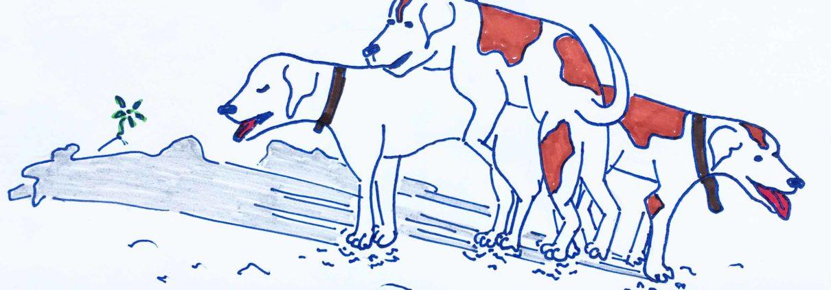 Vidas perras